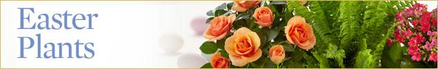 Easter Plants by Royal Fleur Florist