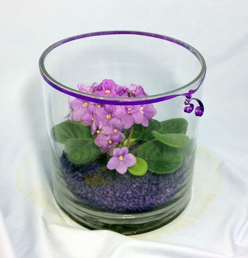 African Violet Cylinder - Click Image to Close
