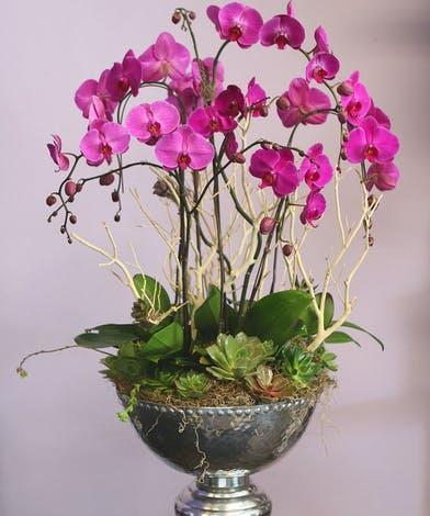 6 Stems Orchids Planter