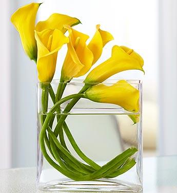 Mini Calla Lily In Rectangle Vase Bouquet Royal Fleur