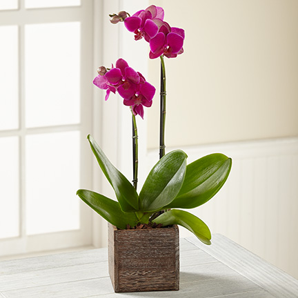 Purple Orchid in Wood Box - Click Image to Close