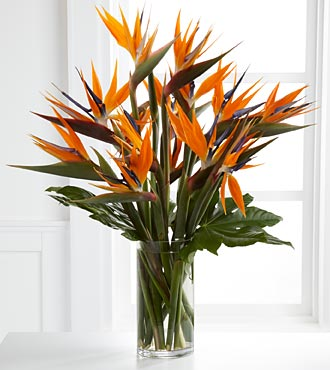 Enticing Luxury Bouquet - Click Image to Close
