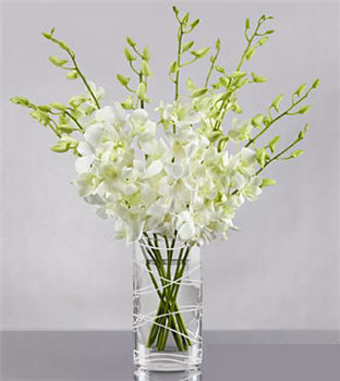 Distant Dreams Orchid Bouquet - Click Image to Close