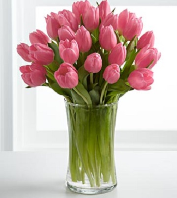 Pink Prelude Tulip Bouquet- 20 Stems - Click Image to Close
