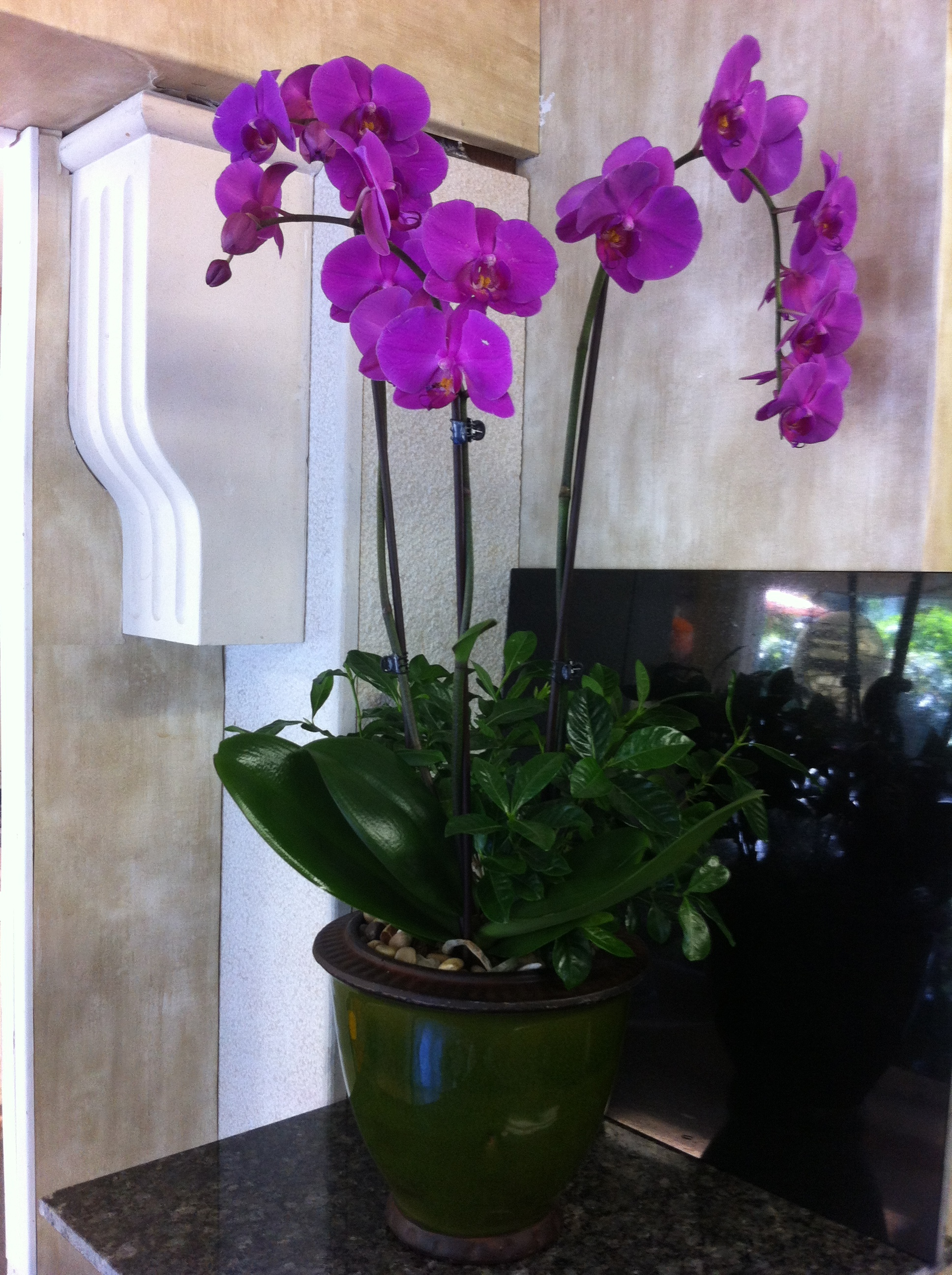 Double Stem Dark Purple Orchid Planter - Click Image to Close