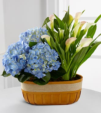 Spring Skies Hydrangea & Calla Lily Duo - Click Image to Close