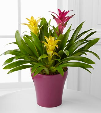 Tropical Traditions Bromeliad Garden - Click Image to Close