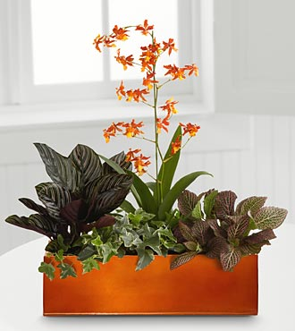 Vibrant Beauty Windowbox - Click Image to Close