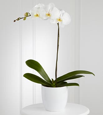 White Orchid Planter - Click Image to Close