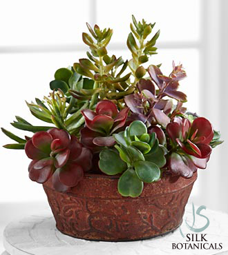 Succulent Dish Garden - Click Image to Close