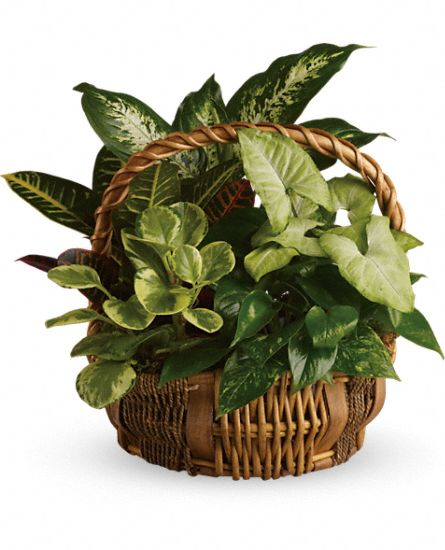 Emeral Garden Basket Plants