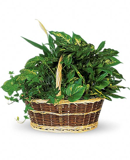 Basket Garden Plants