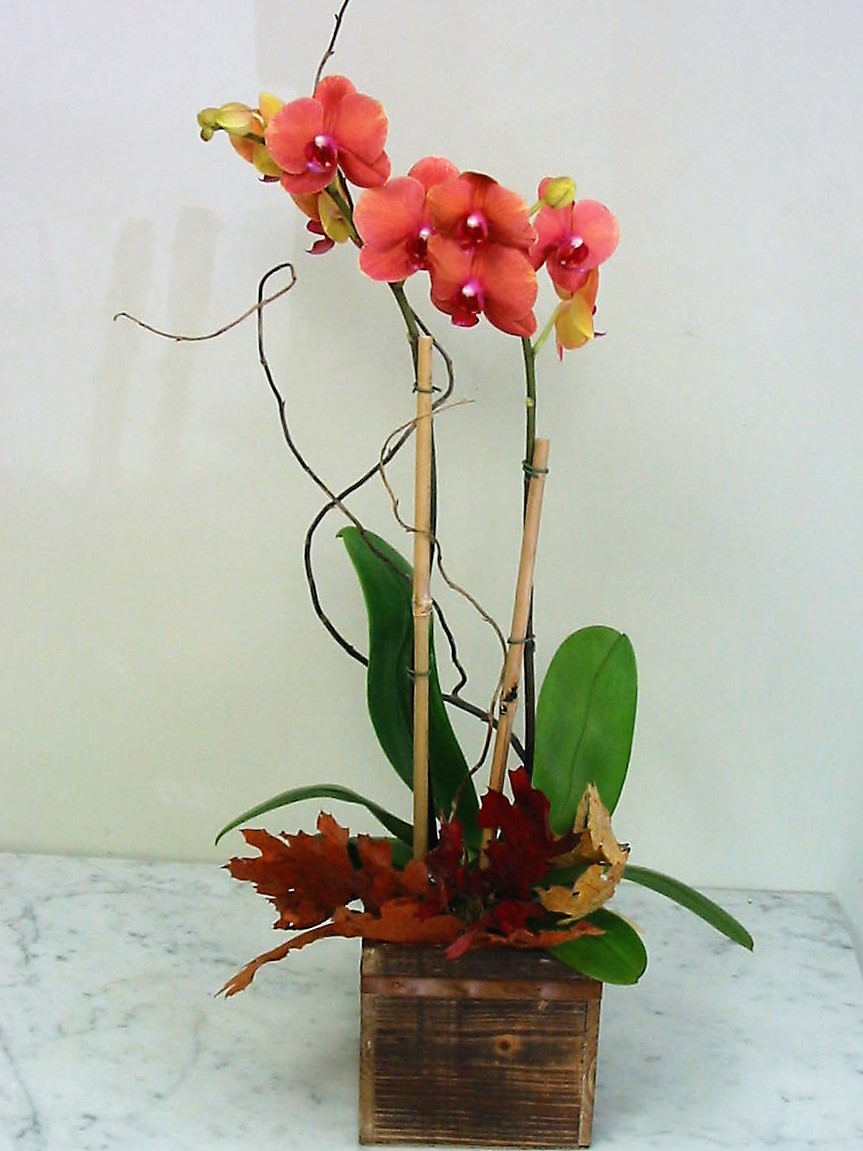 Fall Orchid in a Wood Box