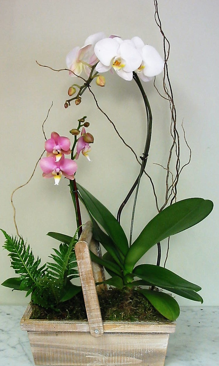 Watch Over Me Orchid Planter