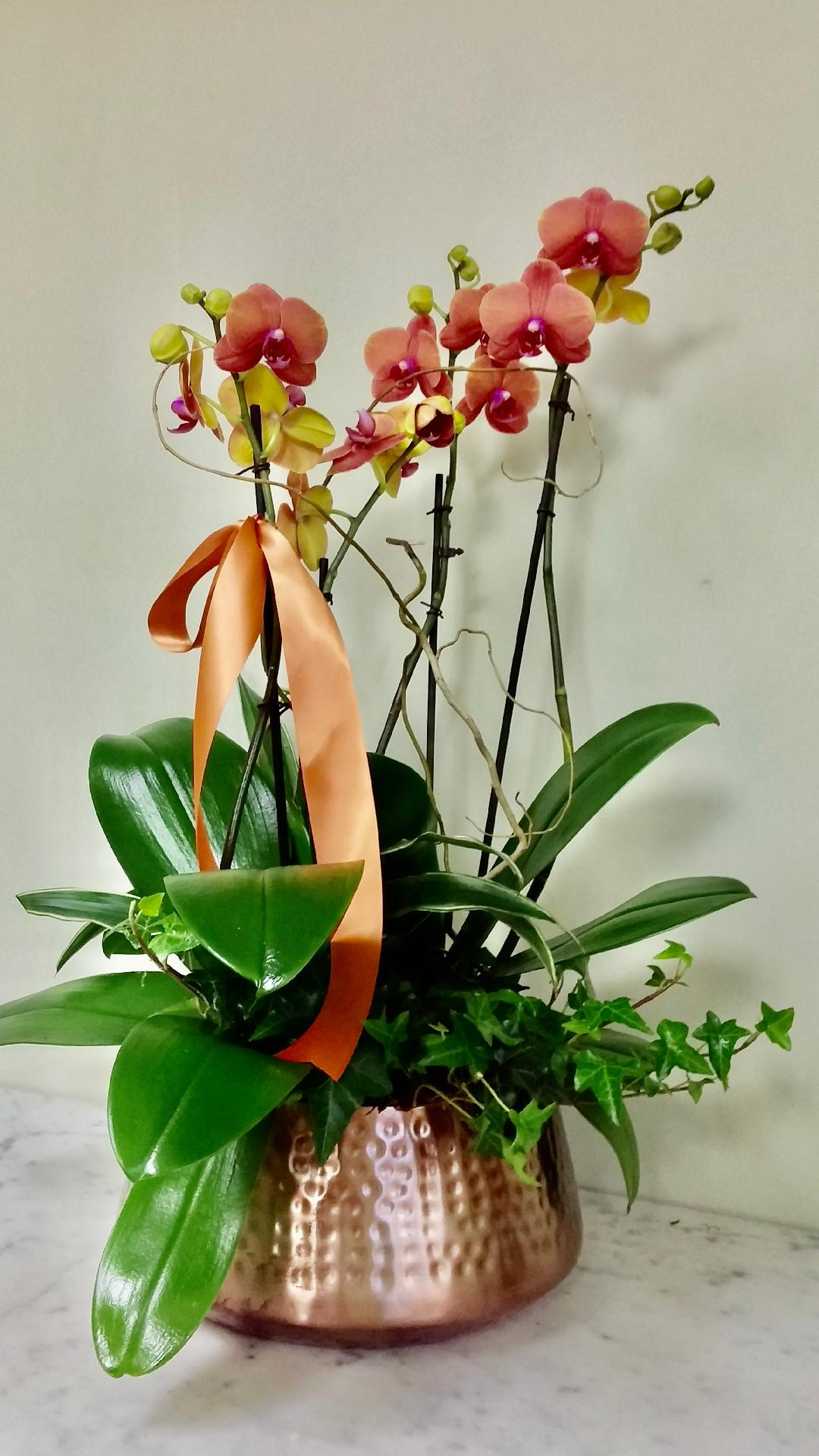Above Sunset Orchid Planter